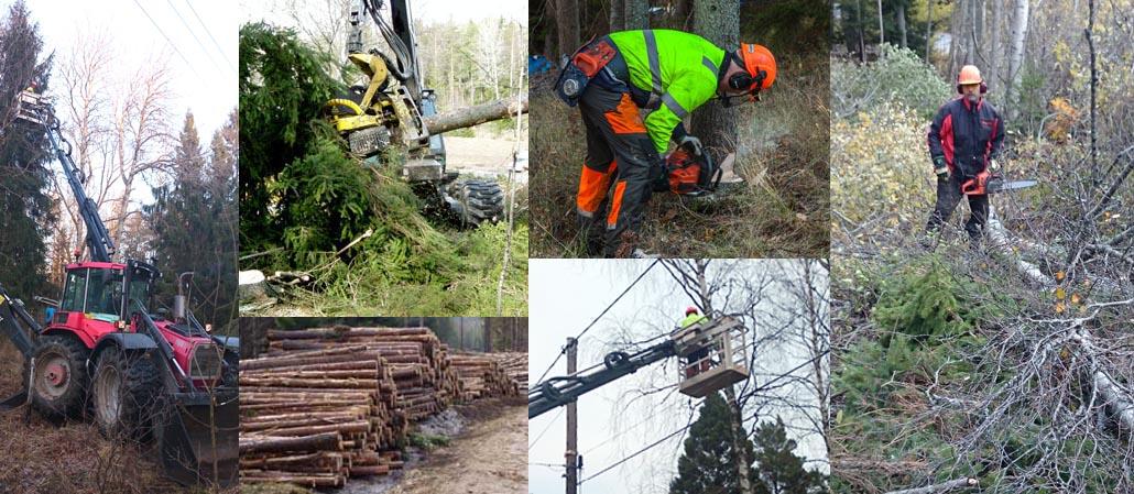 Skogsavverkning och skogsvård - skogstjänster i stockholm och nynäshamn
