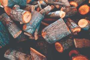 Skogsavverkning i Stockholm & Nynäshamn